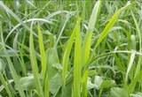 Futter_Gras.jpg